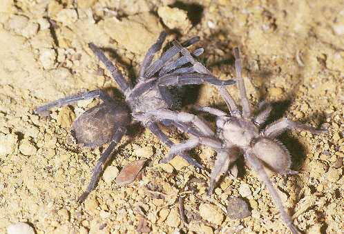 Wie Alt Können Spinnen Werden